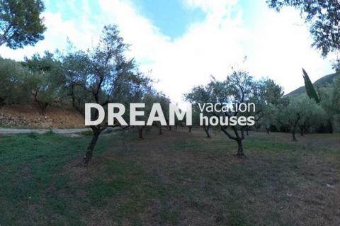 Description Macherado, Plot For Sale, 2.688 sq.m., Features: For development, Price: 40.000€. Πασχαλίδης Γιώργος Additional Information Olive grove with a total surface of 2687.75 sq.m. in Macherado of Zakynthos. It has a building potential of 400 sq...