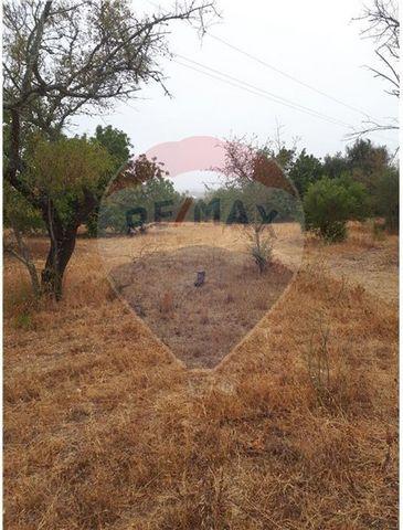 Descrição Excelente terreno agrícola todo plano localizado no Algoz. Este terreno óptimo para agricultura, tem estrada alcatroada mesmo ao pé, electricidade também está muito perto, podendo caso deseje colocar uma Mobil Home. Venha visitar.