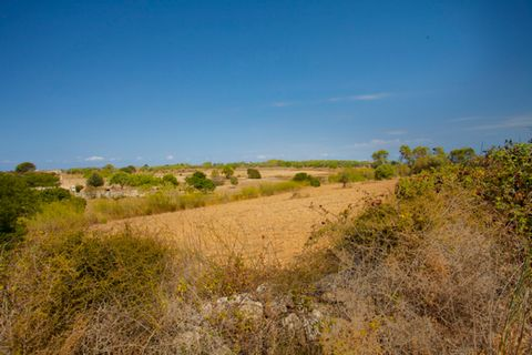 Land of 35,000 m2 in a quiet area between Algaida, Montuiri and Pina, overlooking the valley, ideal for a house with a garden and swimming pool. Property located in Algaida, in a very quiet area. Located on an a hill in the area of Son Munar overlook...
