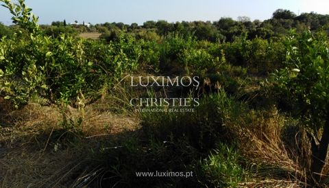 Large farmhouse , for sale , Luz de Tavira , Algarve . The property is current and essentially dedicated to the exploitation of the orchard , however still has a ruin with 294m2 that could be rebuilt for housing . The farm has an irrigation tank, a n...