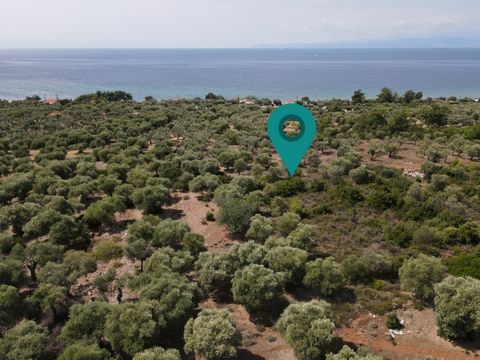 Property Code. 11115 - Agricultural FOR SALE in Thasos Skala Kallirachis for €10.000. Discover the features of this 1000 sq. m. Agricultural: The agency Thassos Realestate located in Thassos and specializes in real estate in Thassos Island - Greece. ...